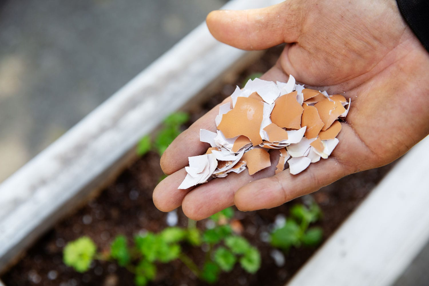 A hand with broken egg shells and garden in background.